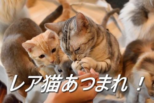 2020 ねこあつめレア猫 ねこあつめのレアネコ一覧!猫の種類や出現グッズ・攻略方法を解説!